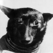 Гагарин родился и полетел в космос после собак