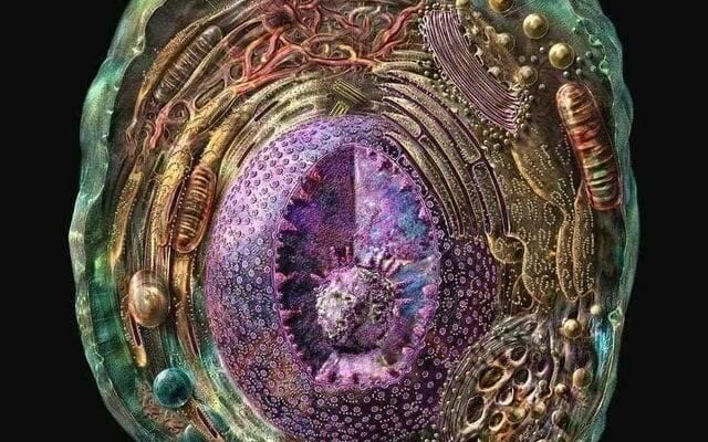Изображение клетки
